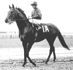 Dr. Fager the only horse in racing history to win four Eclipse Awards in the same year, Champion sprinter, Champion turf horse, Champion handicap horse and HORSE OF THE YEAR 1968