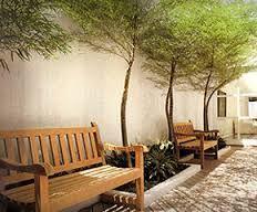 Resultado de imagem para imagem bambu ornamental