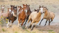 Where to See Coastal Wild Horses : Spot wild horses and ponies on the beautiful beaches and islands of the Southeast states of Georgia, Virginia, and North Carolina. Pretty Horses, Horse Love, Beautiful Horses, Animals Beautiful, Wilde Mustangs, Cavalo Wallpaper, Wild Horses Running, Into The Wild, Horse Wallpaper