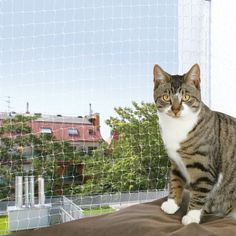 Trixie Protective Net For Cats - Transparent - 6 x Buy A Kitten, Kitten Care, Cat Litter Tray, Outdoor Cat Enclosure, Cat Reading, Cat Vs Dog, Nylons, Types Of Cats, Gatos