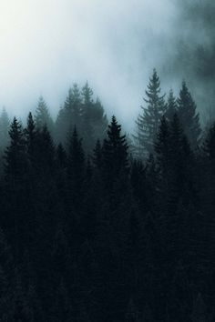 Dark woodlands in Norway Forest Photography, Fine Art Photography, Landscape Photography, Travel Photography, Aerial Photography, Photography Tips, Landscape Photos, Abstract Landscape, Dark Landscape