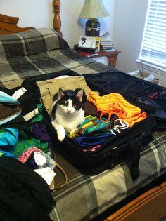 """Please pack me!"" thinks Zinnia."