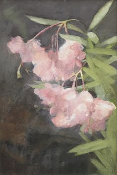 "huariqueje: ""Marie Heineken Amsterdam 1844-1930 Oleander, watercolour on paper Source: http://www.simonis-buunk.com """