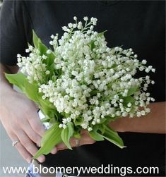 Spring Wedding Flowers: white lily of the valley bridal bouquet. Small and delicate, beautiful Wedding Flower Guide, Spring Wedding Flowers, Wedding Bouquets, Wedding Ideas, Spring Blooms, Bridesmaid Flowers, Floral Bouquets, Wedding Decor, Wedding Stuff