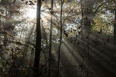 Autumn in Landshut by Martin Kochloefl on 500px