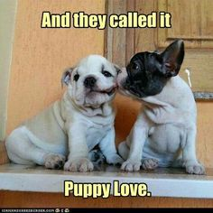 English-Frenchie Love