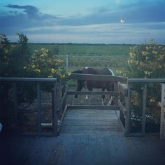 When the view out the kitchen door during dinner includes a horse you know you're in #texas #vacay