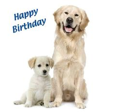 Quality Selection Of Labrador Birthday Greetings Cards Father Son