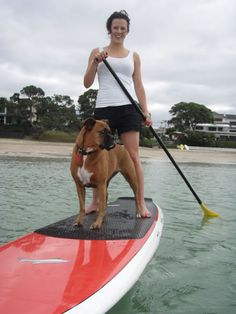 Paddle board dogs - Google Search