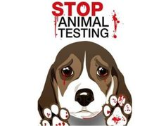 Beagles are the dogs most often used for cruel animal testing. Stop Animal Testing, Stop Animal Cruelty, Animal Testing Quotes, Save Animals, Animal Welfare, Animal Rights, Beagles, Beagle Puppies, Cruelty Free
