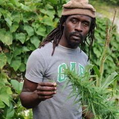 http://blog-cannabis.com/  #instaweed #weedstagram #weed...