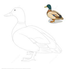 Draw a Duck by Tracing Dashed Line and Color Art Drawings For Kids, Bird Drawings, Art Drawings Sketches, Drawing For Kids, Drawing S, Easy Drawings, Duck Drawing, Colouring Pages, Free Coloring