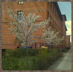 Berlin im Frühling by dungeonkeeper_2002, via Flickr