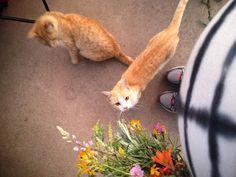 Can still see toes = baby still baking.  #growingababe #firsttimemom #barncats #homesteadlife #therestoringsimplehomestead #wildflowers http://ift.tt/29D7hzZ