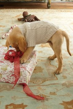 Cable Knit Dog Sweater - Clothes For Dogs, Sweaters For Dogs, Dogs Wearing Clothes | Soft Surroundings