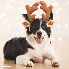 Oh, deer! This pup is ready for Santa's sleigh with a reindeer antler headband. #Pawlidays