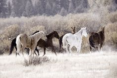 Love a group of wild horses