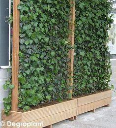 New page 1 Source by Garden Privacy, Outdoor Privacy, Backyard Privacy, Garden Fencing, Garden Trellis, Garden Beds, Backyard Landscaping, Garden Dividers, Plantas Indoor