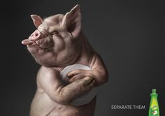 "Sunlight Dishwashing Liquid: ""Pig"" Print Ad  by LOWE Bangkok"
