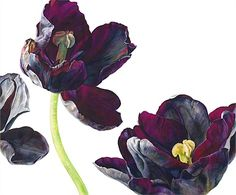 Black tulips illustration by Rosie Sanders