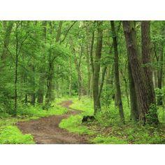 Image result for forêt mixte