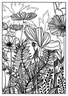 Beautiful Nature PicturesGood Morning PicturesBeautiful Butterfly PicturesNature PicsIn NatureImages Of NatureMorning LoveBlue