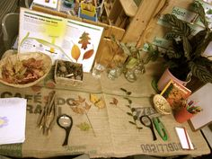 Lovely discovery area - shared by Kathy Walker Science Center Preschool, Science Area, Preschool Activities, Science Table, Inquiry Based Learning, Learning Centers, Investigation Area, Investigations, Role Play Areas