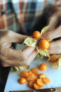 Physalis. | London fridge
