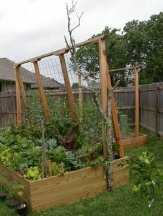 veggie garden trellis