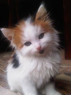 """""""My kittens look at me like little angels, and always after doing something especially devilish."""" --Jaime Ann Hunt"""