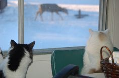 Mewstash and the Princess watching the deer. Husky, Deer, Corgi, Scenery, My Arts, Rain, Windows, Animals, Princess