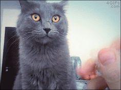 Funny cats - part 197 (40 pics + 10 gifs)