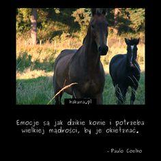 Emocje są jak dzikie konie i potrzeba wielkiej mądrości, by je okiełznać. - Paulo Coelho