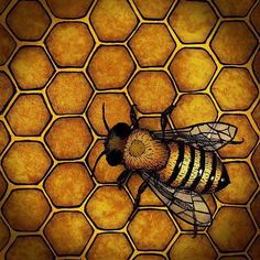 1ed39e40e34 The Honey Bee by a.miller ~ Look to the hard-working honey bee for guidance  on how to live your life.