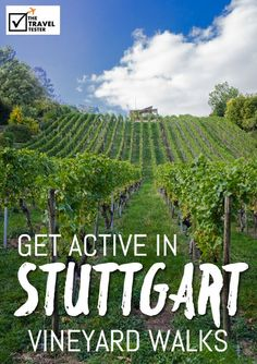 Do in Stuttgart Germany: Walk through the Vineyards - The Travel Tester
