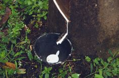 Natural rubber comes from trees | ALICE + WHITTLES.