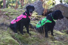 Flap Safety Vest and Flip Scarf - Spring / Summer 2017 by Rukka Pets