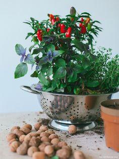 Ter uma hortinha caseira deixou de ser um sonho distante, e o fato é que cultivar as próprias ervas e temperos é uma prática que só traz benefícios.