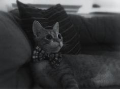 Mr. Cheddar Biscuit: A True Gentleman