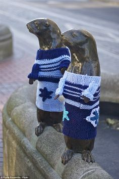 Seals: Two seals are decked out in blue and white sweaters after being yarn bombed inOregon