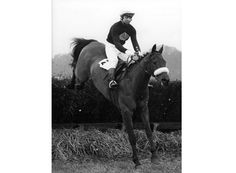 red rum horse   Red Rum: 12 fascinating facts about this legendary steeplechaser