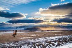 "Mark Mesenko - Ronan, Montana ""Stormy"""