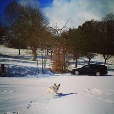 Sieh dir Instagram-Fotos und -Videos von Engelbert Bernadett (@szivarlany) an Videos, French Bulldog, Instagram Posts, Outdoor, Pictures, Outdoors, French Bulldog Shedding, Bulldog Frances, Outdoor Games