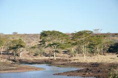Kitty Cotten's Safari experience at Zulu Nyala Heritage Safari Lodge: South Africa safari