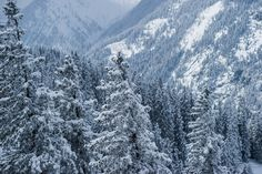 love the winter forrest