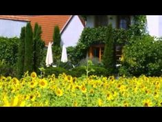 Landhotel Müller-Ruprecht - Kallstadt - Visit http://germanhotelstv.com/mullers-landhotel This hotel is quietly located in the centre of Kallstadt surrounded by vineyards directly on the German Wine Route (Weinstraße). The hotel is set in an historic winery and offers free WiFi. -http://youtu.be/DcQvkr0kDbM