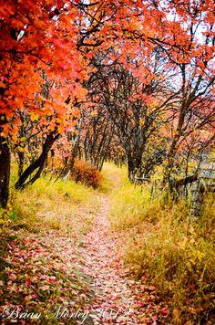 ***Autumn path (Utah) by Brian Morley cr.c.