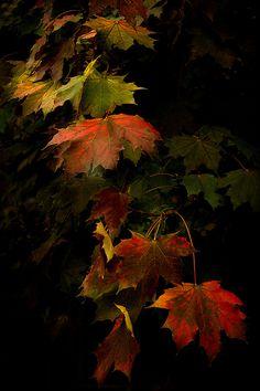 Leaf Cascade