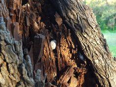 Wonderfull tree by lusy_cz_girl