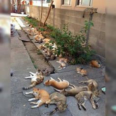 """Let's plant some catnip,"" she said. ""It'll be fun,"" she said. And then the addicts moved in and the neighborhood's never been the same."